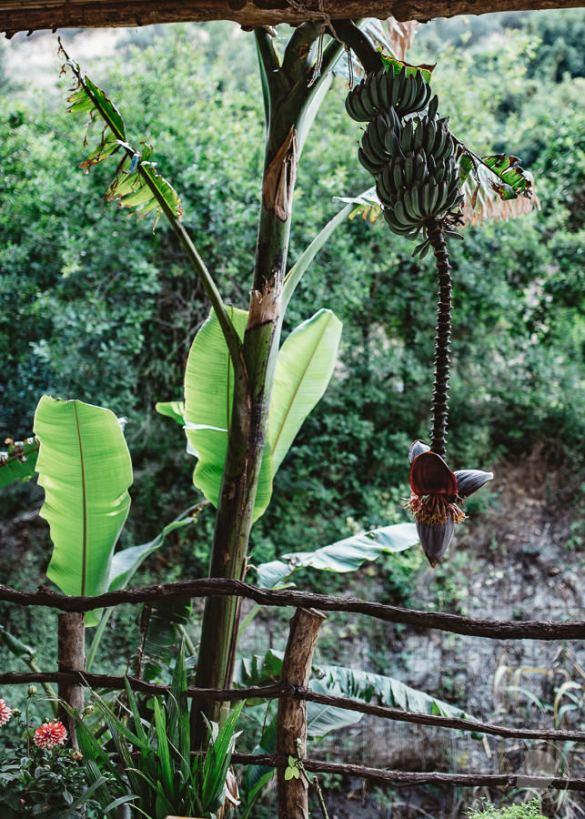 Myli Schlucht -Banane