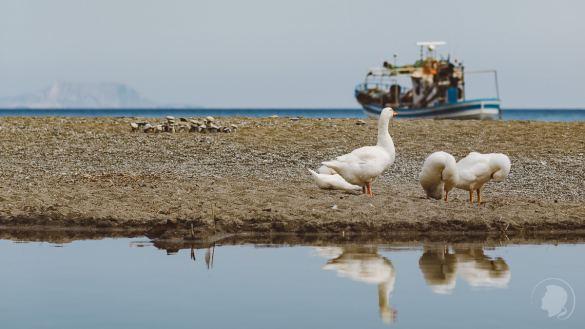 Preveli Beach Kreta - 08