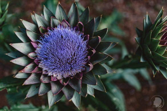 Botanischer Garten Kreta-03