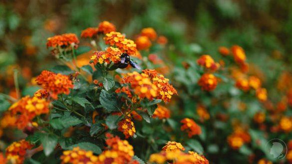 Botanischer Garten Kreta-05