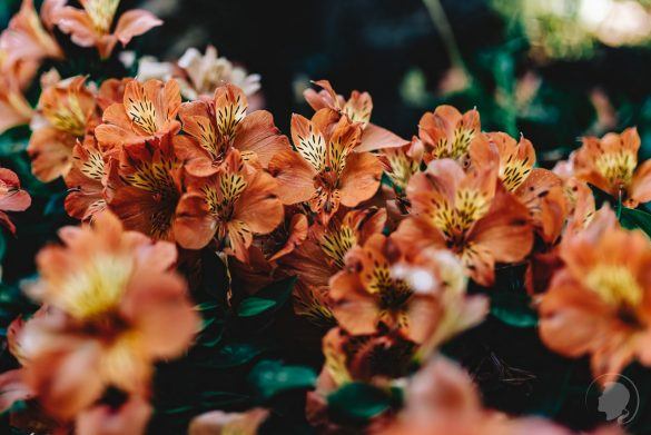 Botanischer Garten Kreta-08