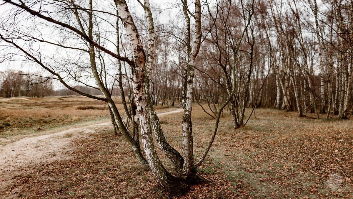Sigma 24mm Art - Landschaften