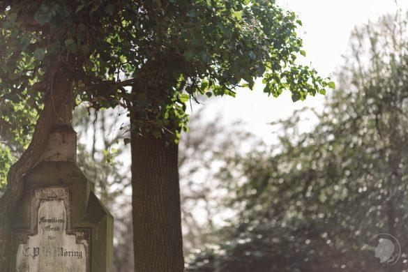 Tamron 85mm 1.8 Review Sigma 85mm Art Offenblende - Gegenlicht
