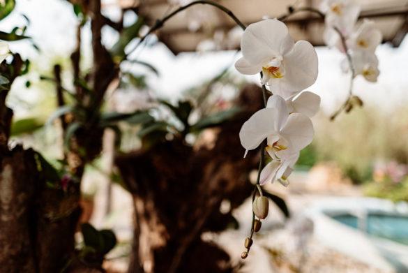 Orchid Garden Perdana Botanical Garden