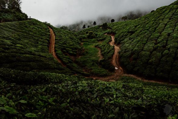 Munnar Indien - 15