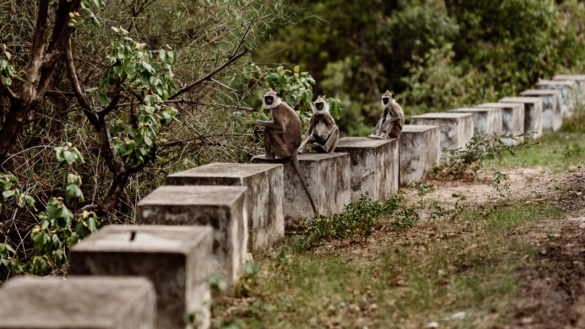 Chinnar Wildlife Sanctuary - 10