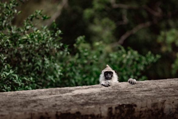 Chinnar Wildlife