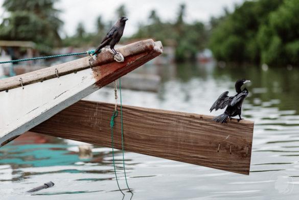 Föhnen - Negombo Sri Lanka