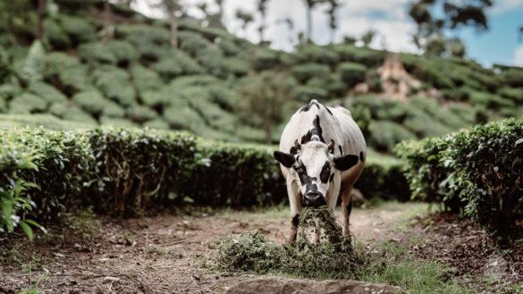 Indien Kerala